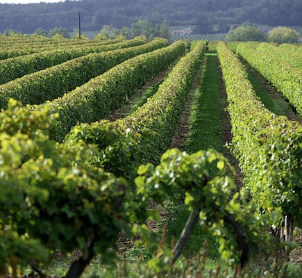 Etypa-Test: Evaluation in the vineyards of a quick in-vitro test for Eutypiose sensitivity